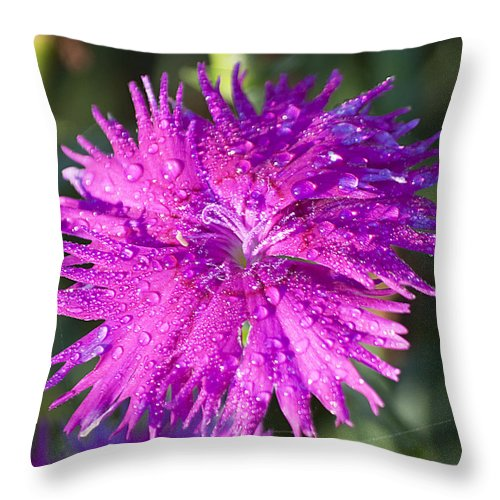 Nature Throw Pillow featuring the photograph Morning Dew by Kenneth Albin