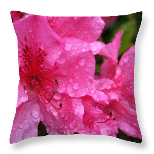 Azaleas Throw Pillow featuring the photograph Morning Dew by Mary Gaines