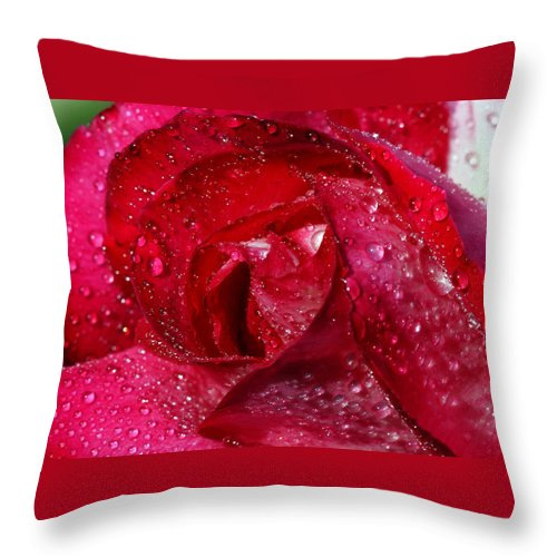 Rose Throw Pillow featuring the photograph Morning Dew On Rose by Cliff Norton