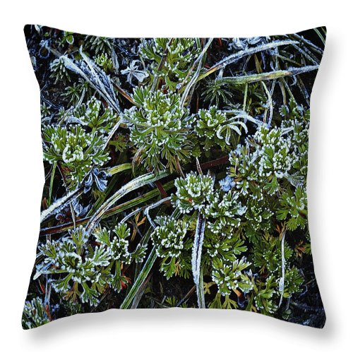 Ground Cover Throw Pillow featuring the photograph Morning Frost by John Christopher