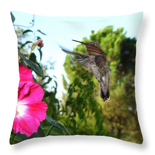 Bird Throw Pillow featuring the photograph Morning Glories And Humming Bird by Joyce Dickens