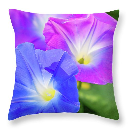 Flowers Throw Pillow featuring the photograph Morning Glory by Brenda Gooder