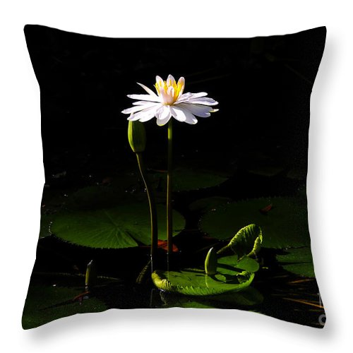 Morning Throw Pillow featuring the photograph Morning glory by David Lee Thompson