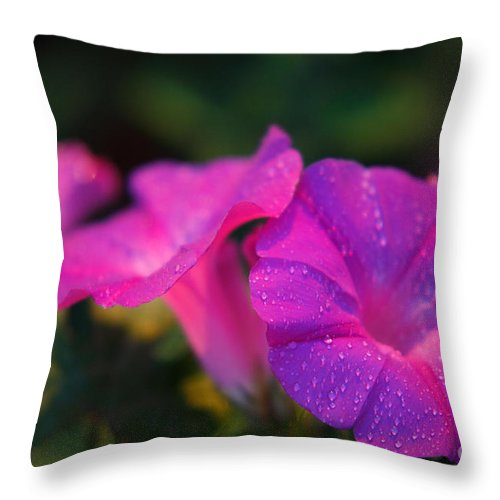 Flora Throw Pillow featuring the photograph Morning Glory by Gaspar Avila