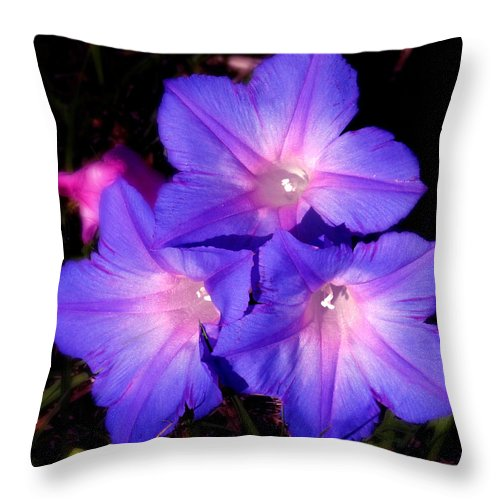 Blue Flower Throw Pillow featuring the photograph Morning Glory by Joseph G Holland