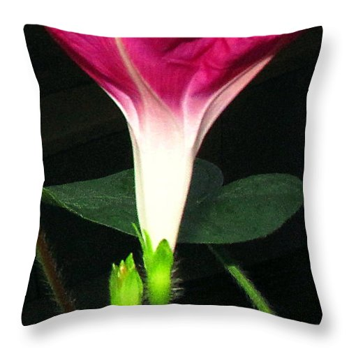 Morning Throw Pillow featuring the photograph Morning Glory Stand Up by Joyce Dickens