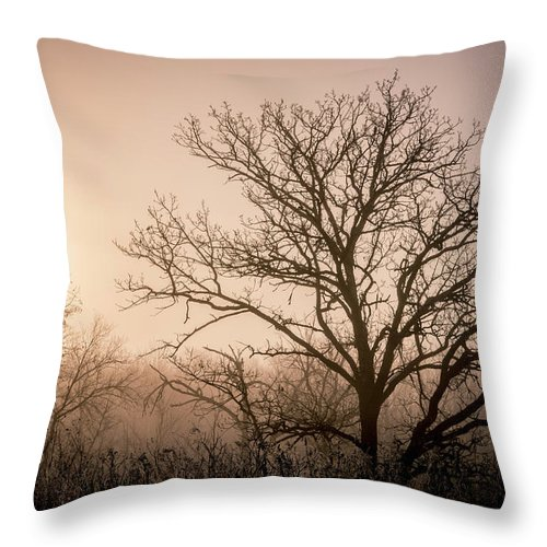 Trees Throw Pillow featuring the photograph Morning Has Broken by Annette Berglund