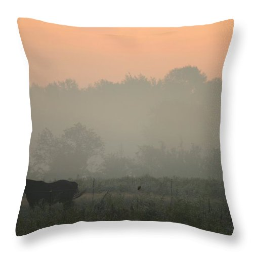 Betsy Lamere Throw Pillow featuring the photograph Morning Mist by Betsy LaMere