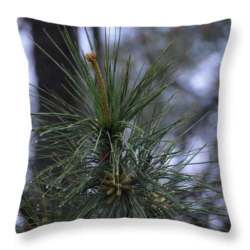 Rain Throw Pillow featuring the photograph Morning Rain by Meg M