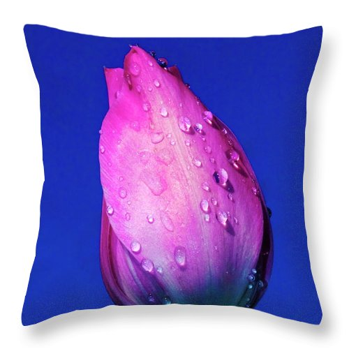 Tulips Throw Pillow featuring the photograph Morning Tulip by Cliff Norton