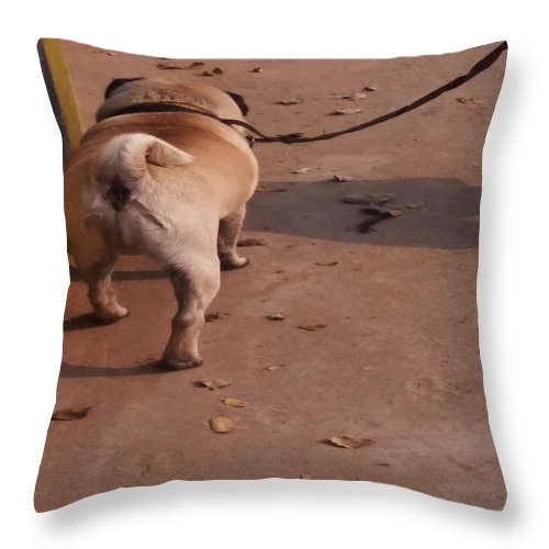 Morning Throw Pillow featuring the photograph Morning Walk by Nilu Mishra