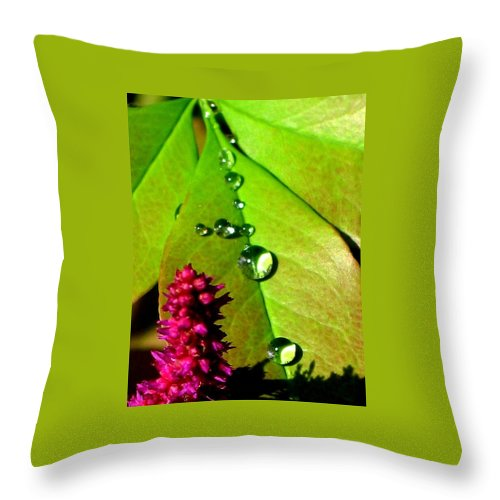 Floral Throw Pillow featuring the photograph Morning's Glory by Marla McFall