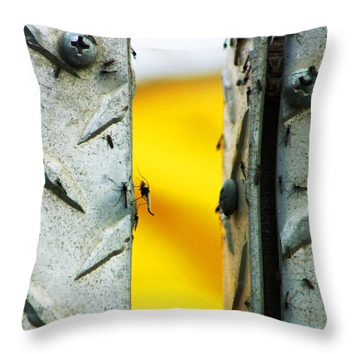Mosquiros Throw Pillow featuring the photograph Mosquitos by Anthony Jones