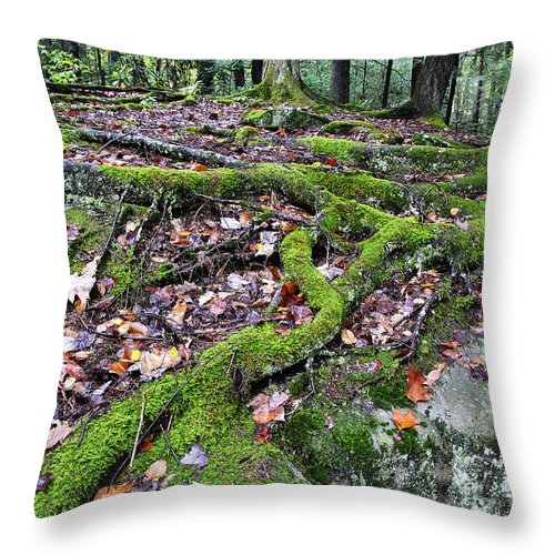 Tree Roots Throw Pillow featuring the photograph Moss Tree Roots Fall Color by Thomas R Fletcher