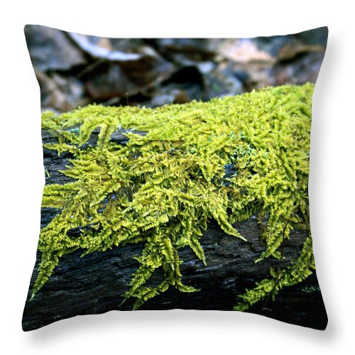 Moss Throw Pillow featuring the photograph Mosss On Blackened Log by Douglas Barnett