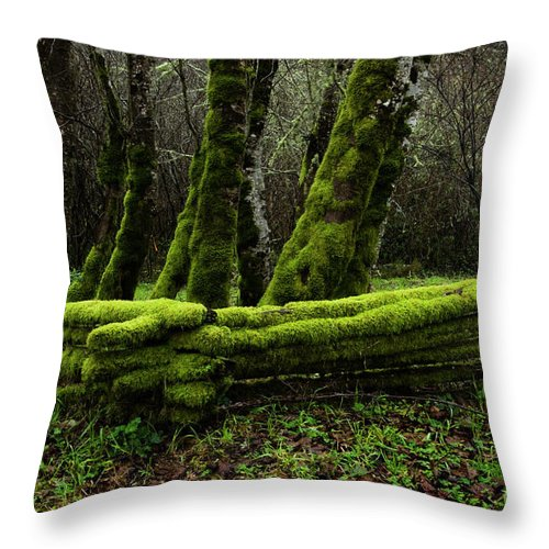 Moss Throw Pillow featuring the photograph Mossy Fence 3 by Bob Christopher
