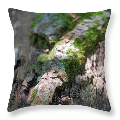 Moss Throw Pillow featuring the photograph Mossy Tree by Trish Hale