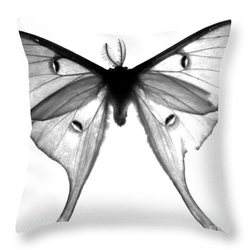 Moth Throw Pillow featuring the photograph Moth by Amanda Barcon