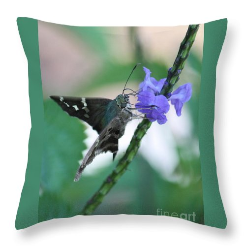 Nature Throw Pillow featuring the photograph Moth On Blue Flower by Carol Groenen