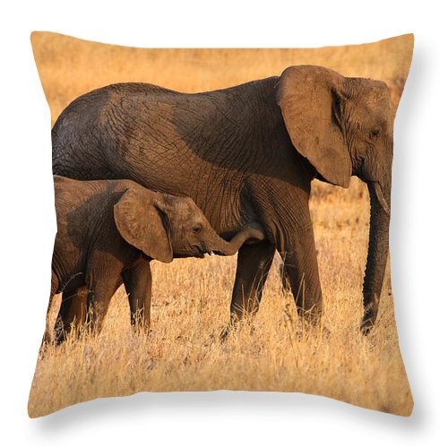 3scape Photos Throw Pillow featuring the photograph Mother And Baby Elephants by Adam Romanowicz