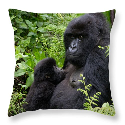 Africa Throw Pillow featuring the photograph Mother And Suckling Baby Gorillas by Milton Cogheil