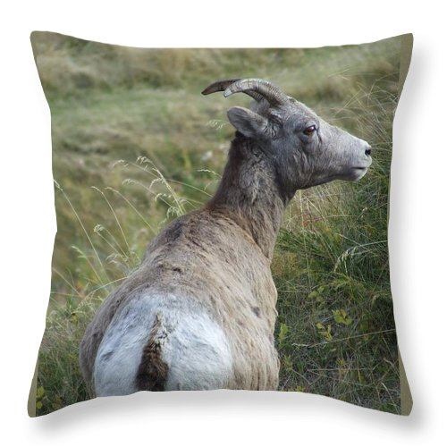 Bighorn Sheep Throw Pillow featuring the photograph Mother Bighorn by Tiffany Vest
