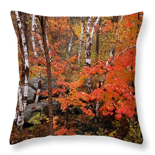 Birch Trees Throw Pillow featuring the photograph Mother Nature's Palette by Linda McRae