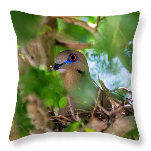 Doves Throw Pillow featuring the photograph Mothering by Marshall Barth