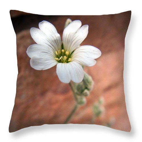 Alpine Throw Pillow featuring the photograph Mountain Beauty by RC DeWinter