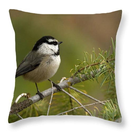 Mountain Throw Pillow featuring the photograph Mountain Chickadee by Beve Brown-Clark Photography