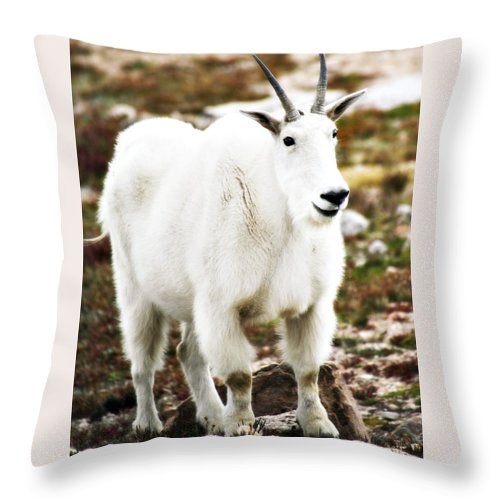Animal Throw Pillow featuring the photograph Mountain Goat by Marilyn Hunt