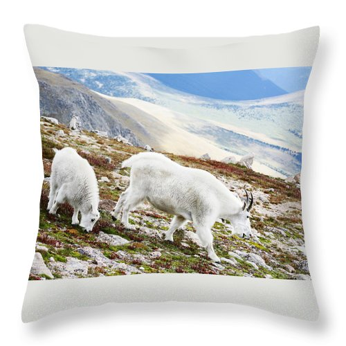 Mountain Throw Pillow featuring the photograph Mountain Goats 1 by Marilyn Hunt