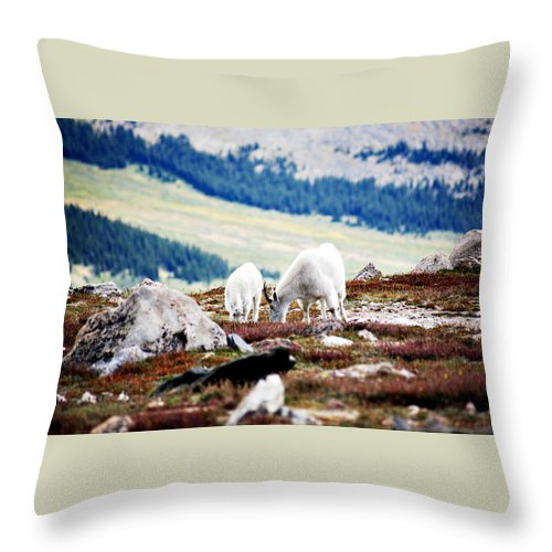 Animal Throw Pillow featuring the photograph Mountain Goats 2 by Marilyn Hunt