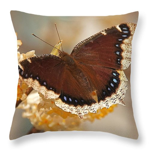 Mourning Cloak Butterfly Throw Pillow featuring the photograph Mourning Cloak Butterfly by Byron Varvarigos