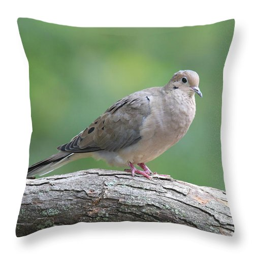 Dove Throw Pillow featuring the photograph Mourning Dove by Sue Feldberg
