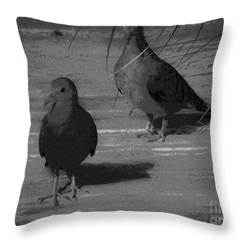 Love Throw Pillow featuring the photograph Mr And Mrs Dove by Camille Pascoe