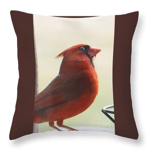 Cardinal Throw Pillow featuring the photograph Mr Cardinal by Maxine Billings