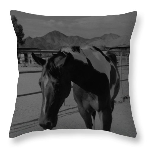 Black And White Throw Pillow featuring the photograph Mr Ed In Black And White by Rob Hans