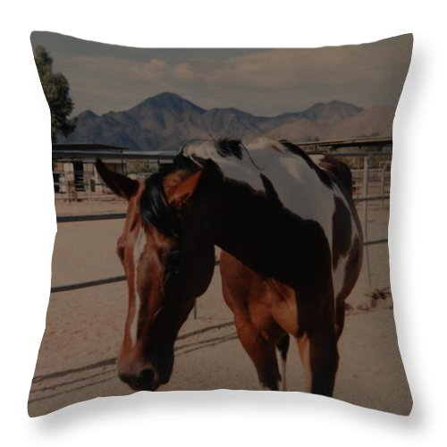 Horse Throw Pillow featuring the photograph Mr Ed by Rob Hans