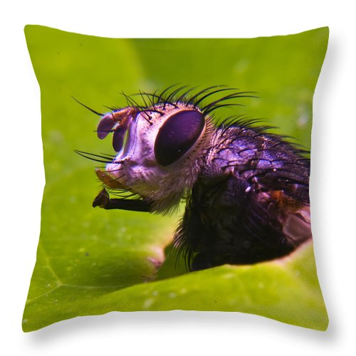 Fly Throw Pillow featuring the photograph Mr. Fly by Douglas Barnett