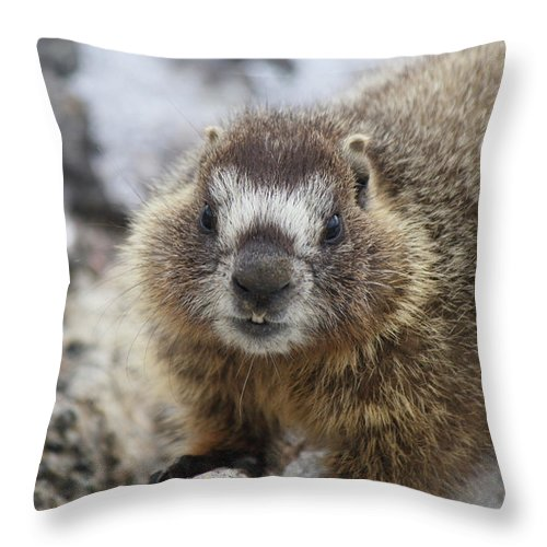 Animal Throw Pillow featuring the photograph Mr. Marmot by Marie Leslie