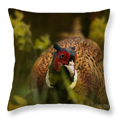 Pheasant Throw Pillow featuring the photograph Mr Spring by Angel Ciesniarska
