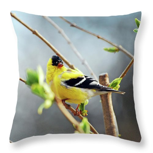 Finch Throw Pillow featuring the photograph Mr. Sunshine by Lori Tambakis