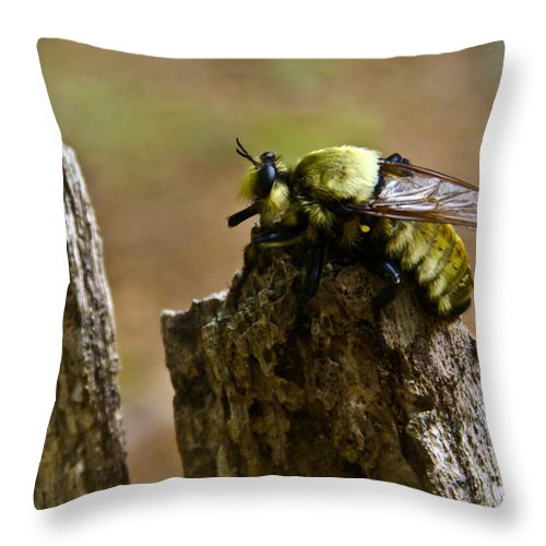 Fly Throw Pillow featuring the photograph Mrs. Fly by Douglas Barnett
