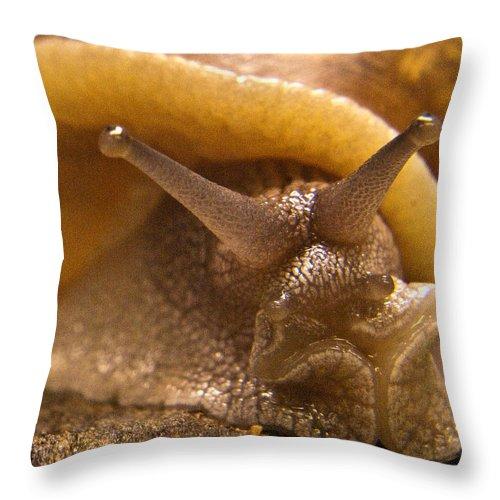 Snail Throw Pillow featuring the photograph Mrs. Snail by Douglas Barnett