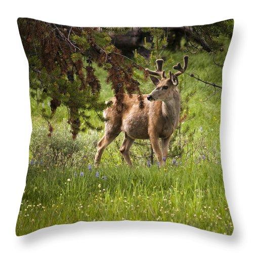 Mule Deer Throw Pillow featuring the photograph Mule Buck Deer by Chad Davis