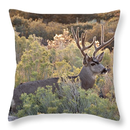 Sothwest Throw Pillow featuring the photograph Mule Deer by Alan Toepfer