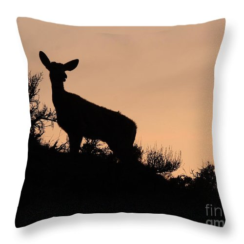 Deer Throw Pillow featuring the photograph Mule Deer Silhouetted Against Sunset Ridge by Max Allen