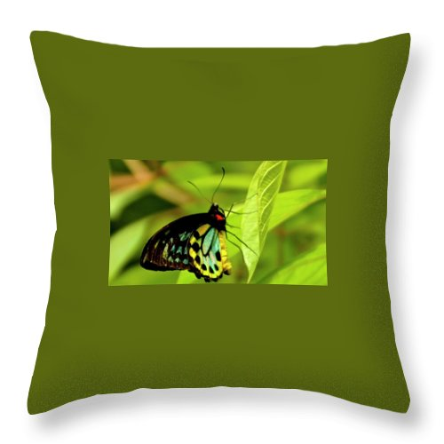 Throw Pillow featuring the photograph Multi Colored Buttrfly by Bill Jordan