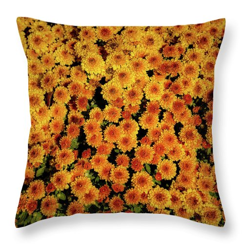 Mums Throw Pillow featuring the photograph Mums The Word by Troy Arnold